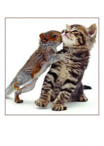 Cat & Squirrel